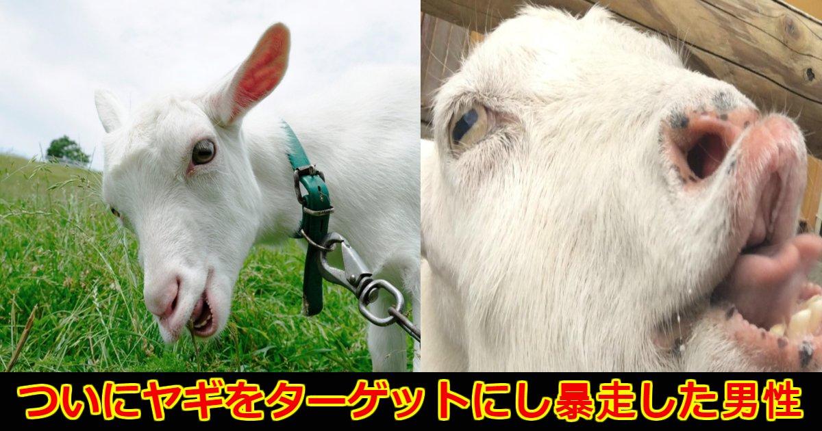 yagi.png?resize=648,365 - インドでムラムラした男性がついにヤギにまで手を出した?その事件の真相が怖すぎる