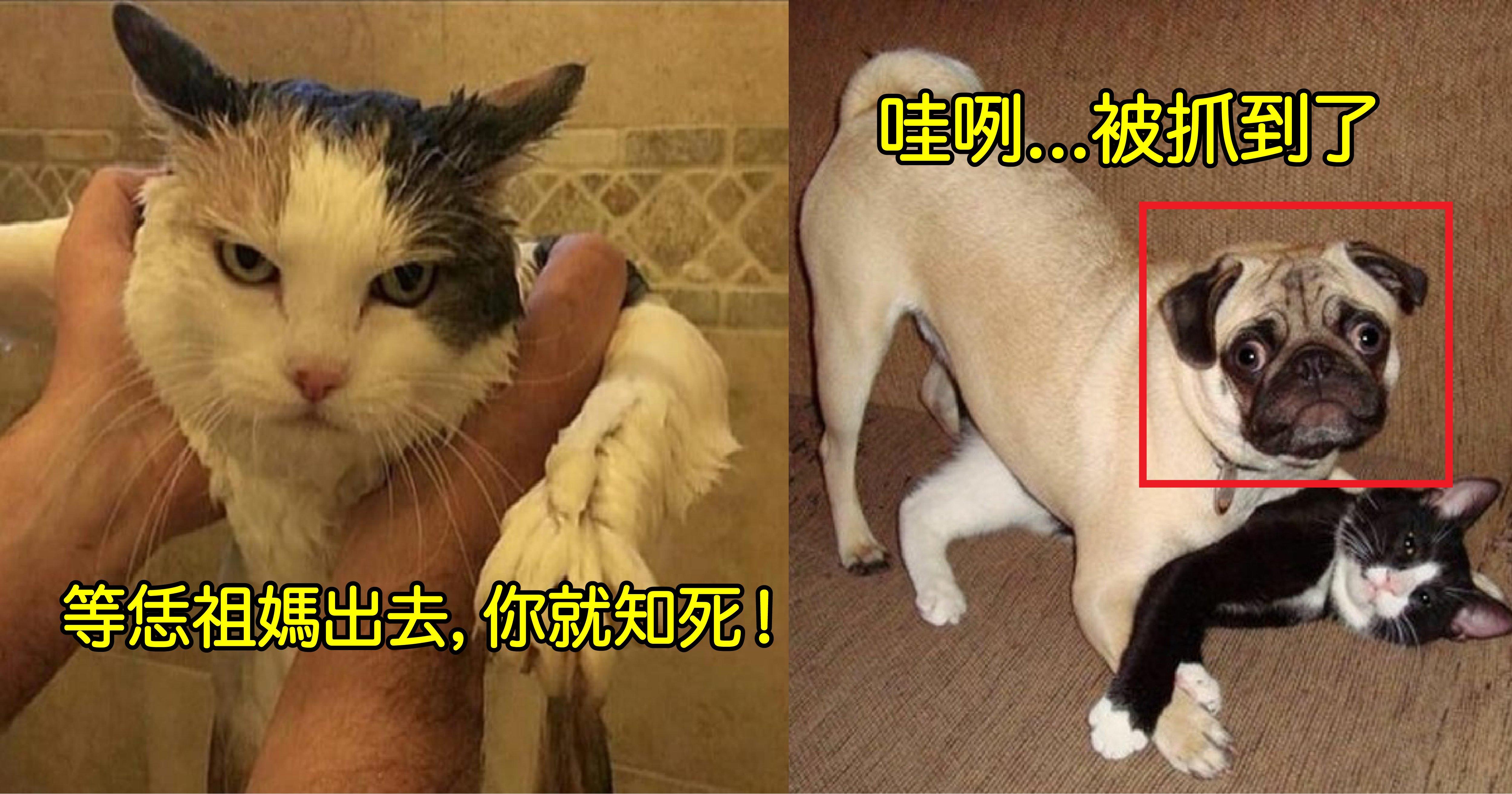 0916 3.png?resize=300,169 - 十張超爆笑寵物表情包!根本可以角逐寵物界的奧斯卡影帝