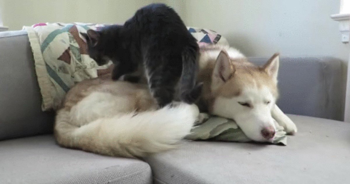 1 116.jpg?resize=1200,630 - 16 Cats Who Have Fallen Madly in Love With the Dog