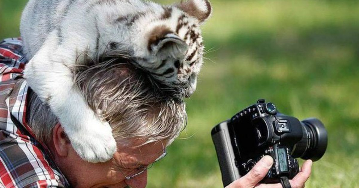 1 125.jpg?resize=1200,630 - Animals Interrupting Wildlife Photographers Is Our New Favorite Thing [17 PHOTOS]