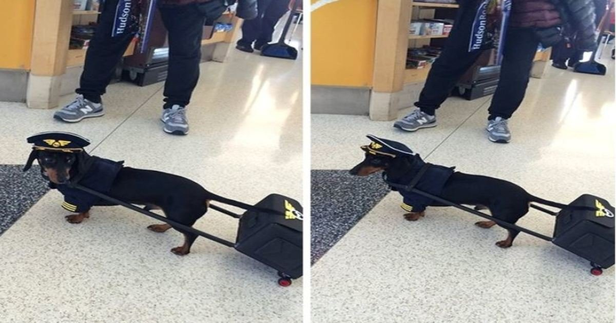 """1 141.jpg?resize=1200,630 - 28 Hilarious Dogs Who Do Everything to Earn the Title of """"Good Boy"""""""