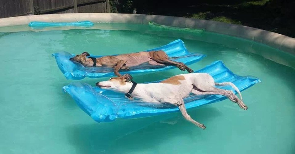 1 208.jpg?resize=1200,630 - 20 Times Animals Had a Real Struggle With Summer