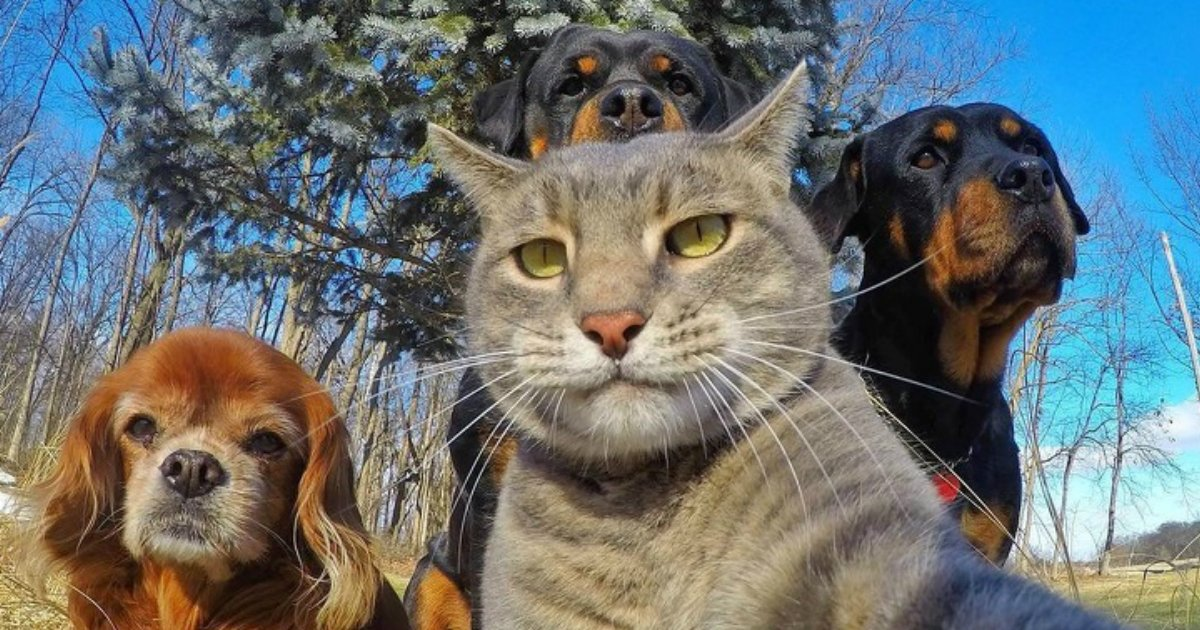 1 21.jpg?resize=1200,630 - 20 Animals That Are Better At Selfies Than You Are