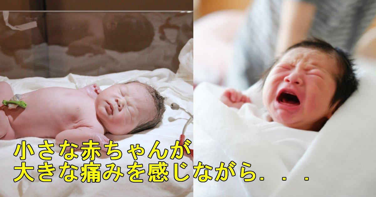 1 230.jpg?resize=648,365 - 生後18日の赤ちゃん「包茎手術」したら性器を切断してしまい…34億円賠償する病院!!