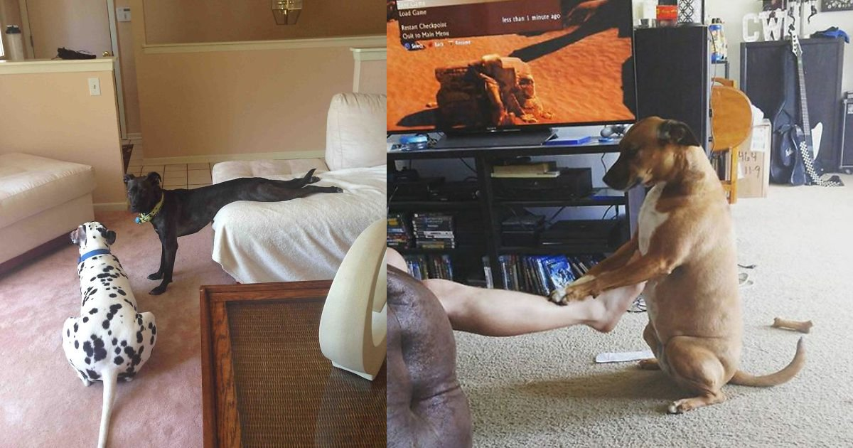 1 262.jpg?resize=1200,630 - 25 Hilarious Times Dogs Were Caught Acting Extremely Weird