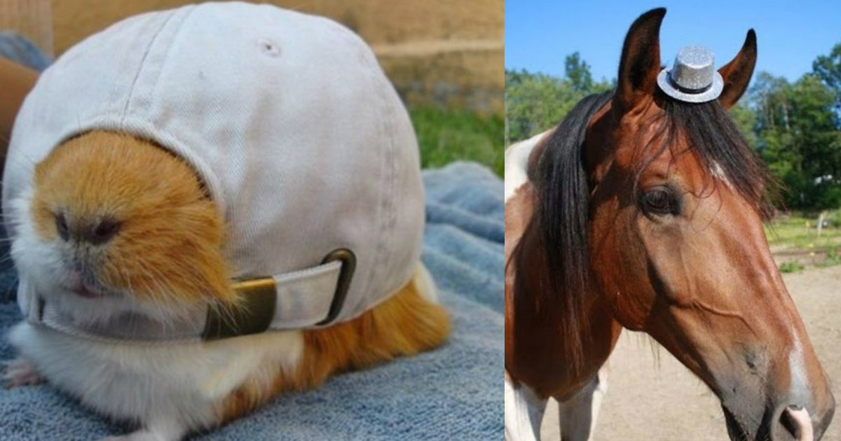 1 265.jpg?resize=1200,630 - Just 21 Adorable Animals Wearing Cute Hats