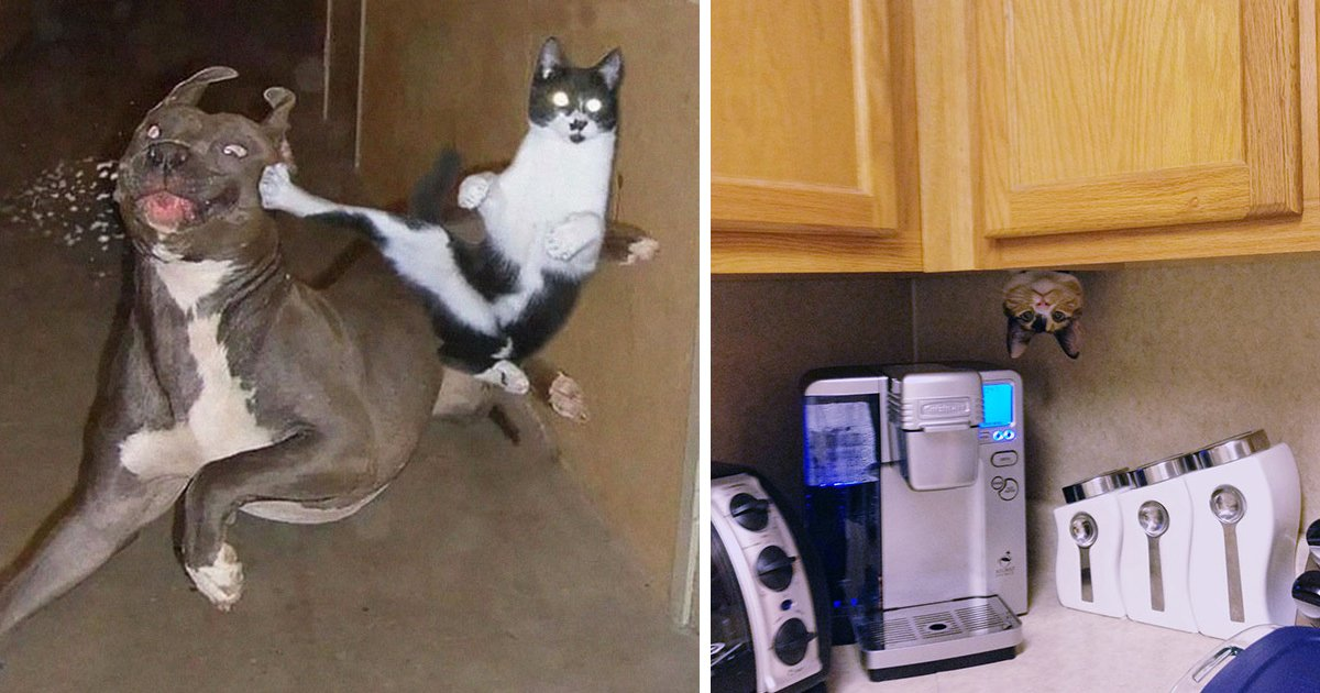 1 266.jpg?resize=1200,630 - 25 Photos Proving That Cats Are Basically Ninjas