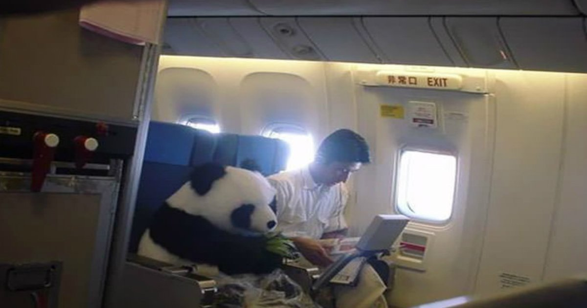 10 10.jpg?resize=636,358 - 50+ Hilarious And Weirdest Things That Ever Happened On Plane