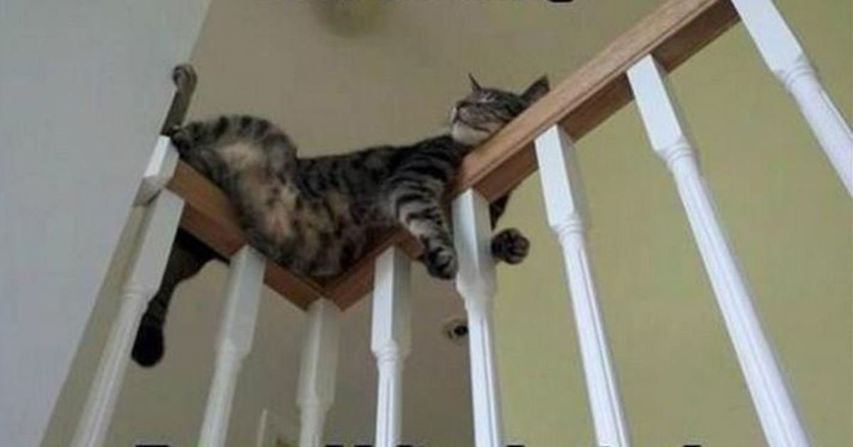 10 19.jpg?resize=636,358 - 21 Cat Logic Pictures That Prove We Will Never Understand Cats. #11 Is so True.
