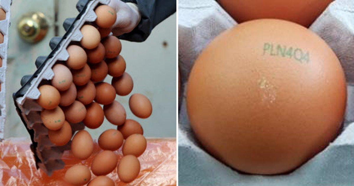 10 40.jpg?resize=300,169 - 계란에 '이 코드' 적혀 있으면 절대 먹지 마세요 ...살충제 계란 다시 유통