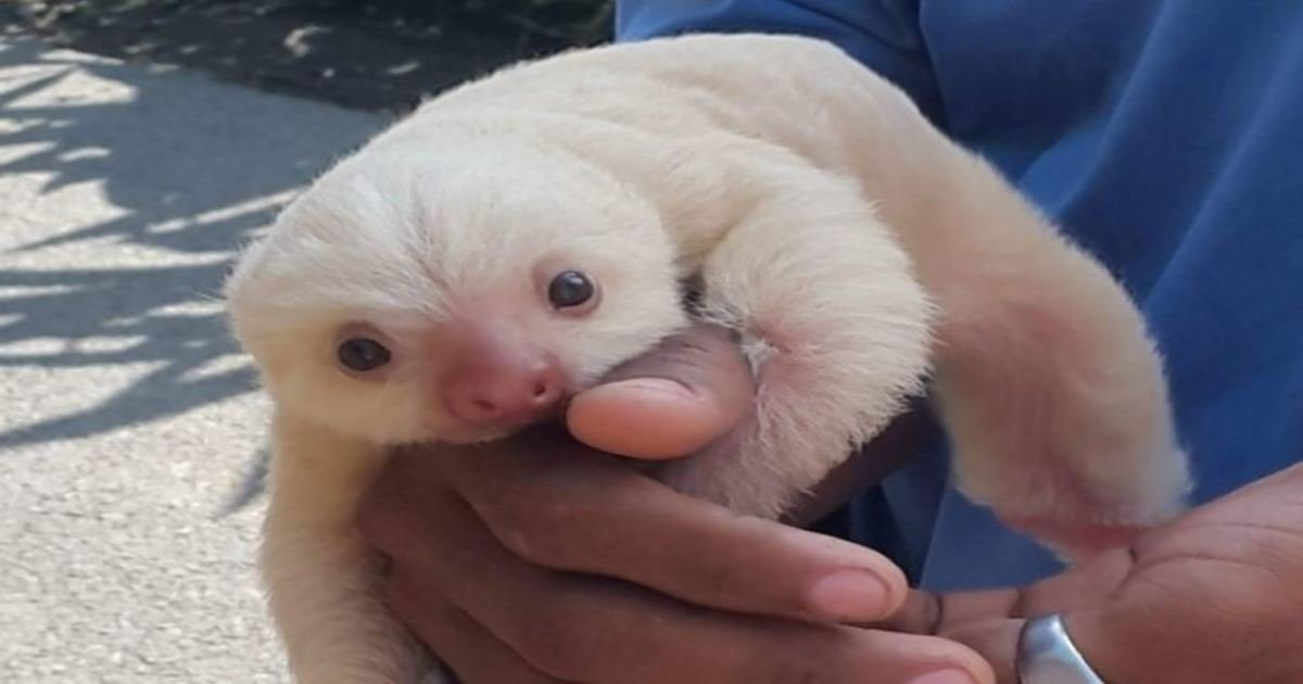 10 52.jpg?resize=636,358 - 18 Precious Animal Babies You've Probably Never Seen