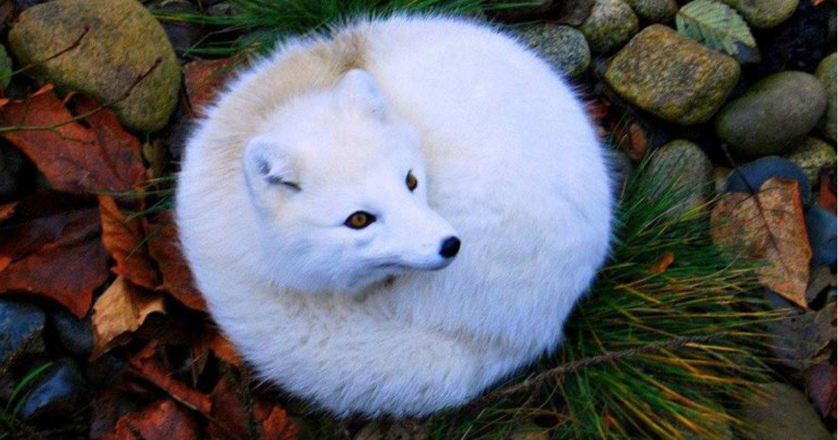 10 95.jpg?resize=636,358 - 16 Adorable Circular Animals