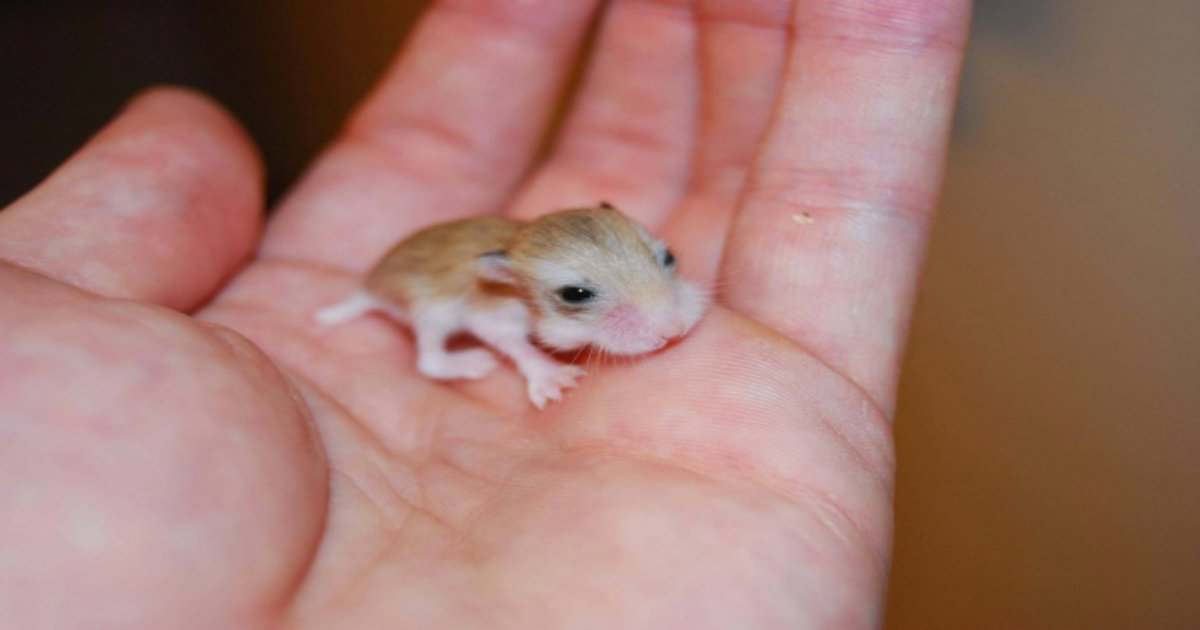 11 9.jpg?resize=1200,630 - 15 Animals Who Make Unexpectedly Cute Babies