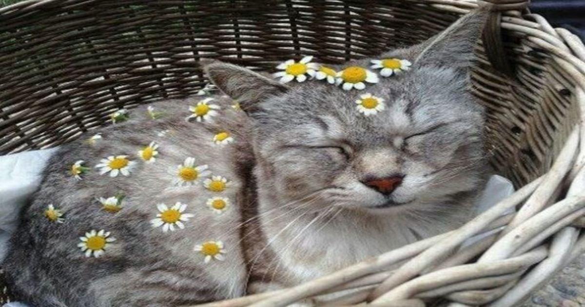 11 98.jpg?resize=1200,630 - 18 Animals Dressed Up For Spring