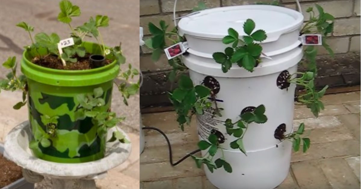 12 68.jpg?resize=1200,630 - Don't Give Or Throw Them Away – Here Are 20 Great Ideas For Repurposing Five Gallon Buckets