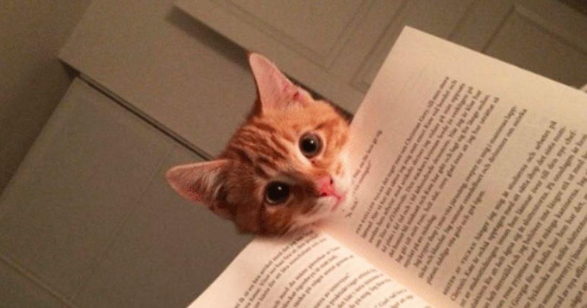 12 71.jpg?resize=412,232 - 16 Katzen, Die Vollständig Das Konzept Des Persönlichen Raums Nicht Verstehen