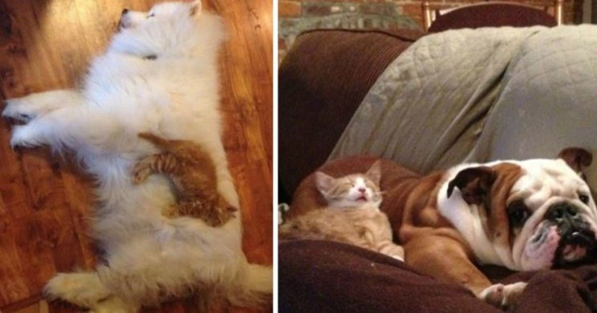 12 87.jpg?resize=636,358 - 20 Funny Photos Of Cats Sleeping On Their Dog Friends
