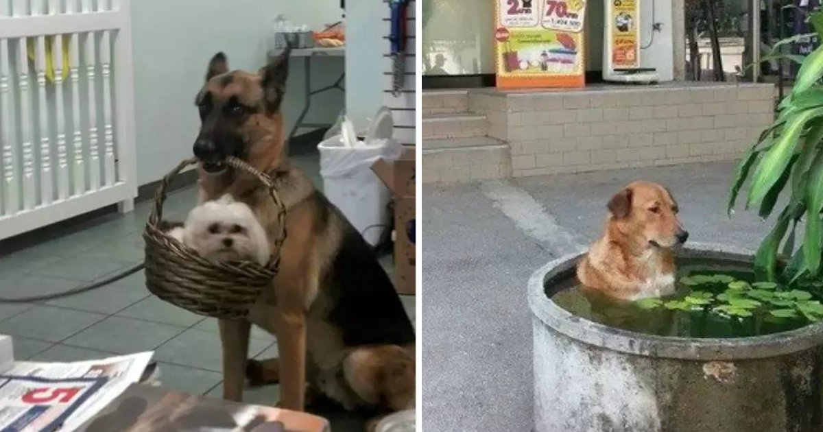 12.jpg?resize=1200,630 - 18 Hilarious Photos of Dogs Doing the Strangest Things