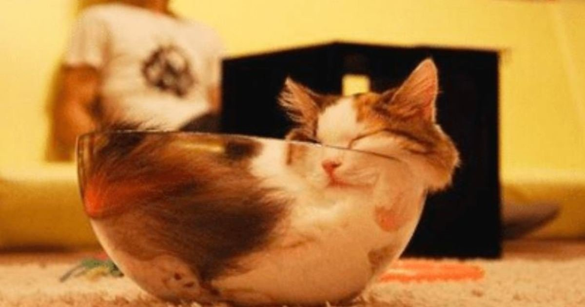 13 67.jpg?resize=412,232 - 15 Katzen, Die An Den Komischesten Orten Eingeschlafen Sind