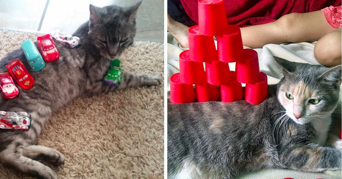 15 57.jpg?resize=1200,630 - 15+ Cat Stacking Examples That Prove Cats Are Super Chill