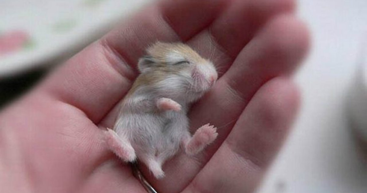 15 81.jpg?resize=1200,630 - 28 Tiny, Tiny Baby Animals That Will Melt You