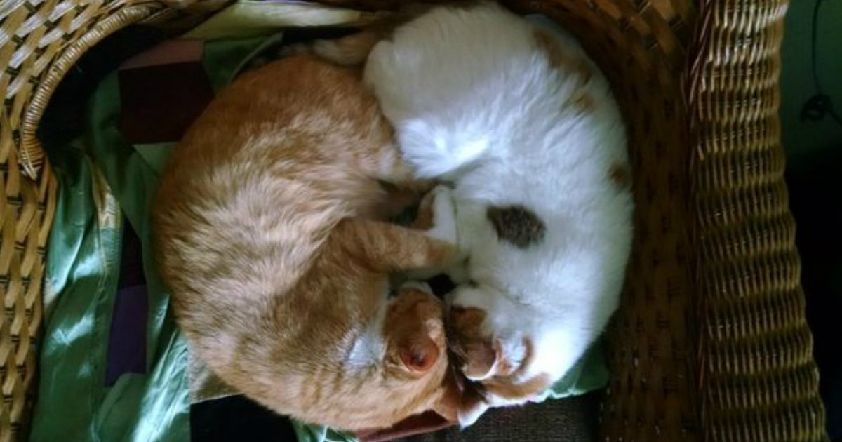 2 110.jpg?resize=1200,630 - 18 Sleeping Cats Who Are Too Cute To Wake Up