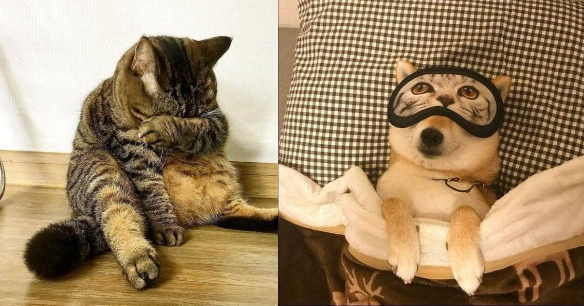 2 154.jpg?resize=1200,630 - Just 19 Silly Photos Of Pets That Will Make Your Heart Laugh