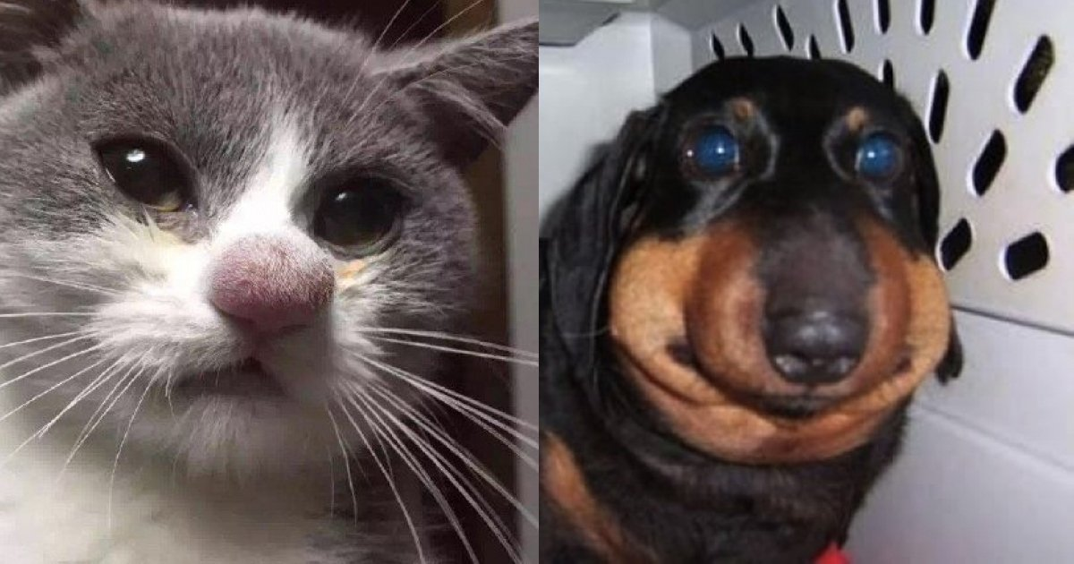 2 201.jpg?resize=1200,630 - 15 Brave Pets Who Took on Bees and Ended up With Battle Scars
