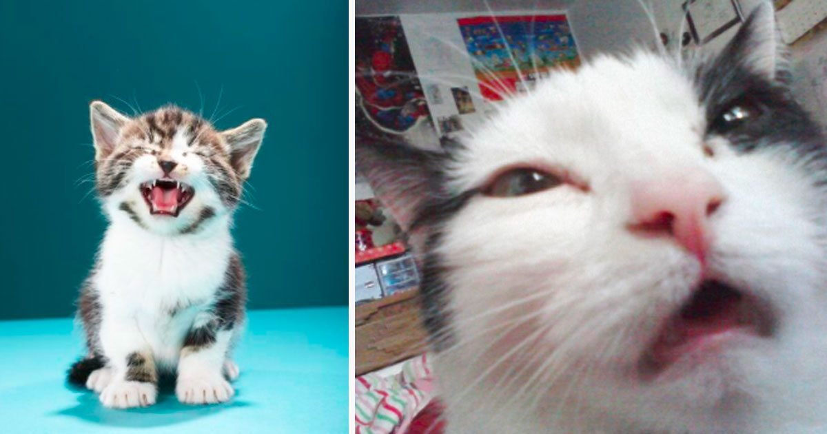 2 205.jpg?resize=1200,630 - 10+ Hilarious Faces Thats Cats Made Right Before They Were About To Sneeze