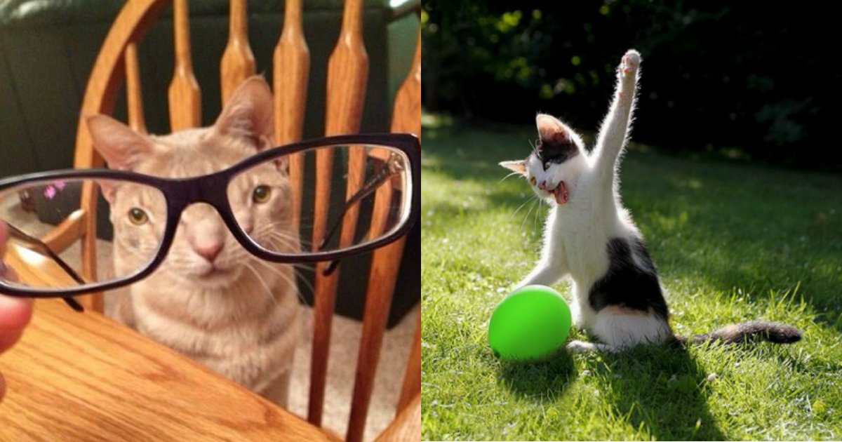 2 210.jpg?resize=636,358 - 30 Cats Caught Doing the Strangest Things