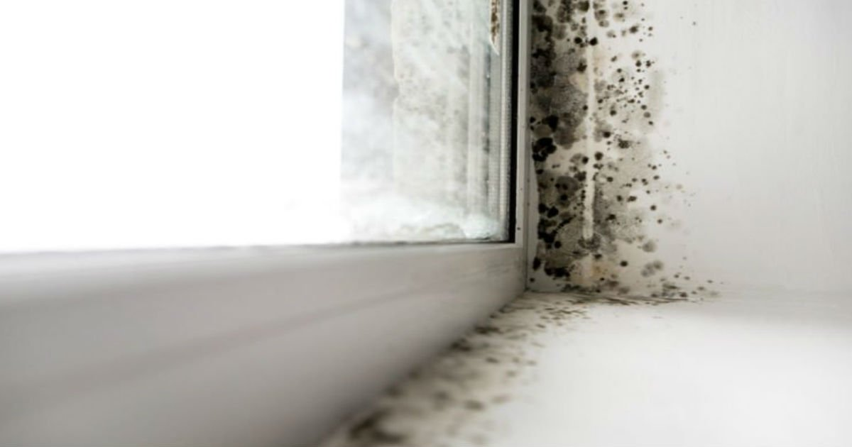 2 8.jpg?resize=1200,630 - 12 Hidden Signs Your House Could Have Toxic Mold