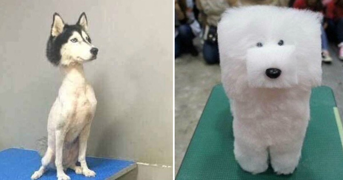 2 83.jpg?resize=636,358 - 17 Fotos de cortes de pelo de mascotas que te harán reír un buen rato