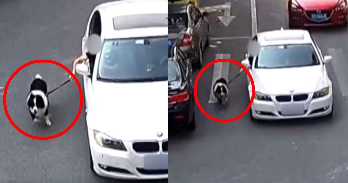 2 85.jpg?resize=636,358 - 「下痢」した犬が汚いと、走る「車」で引きずる飼い主