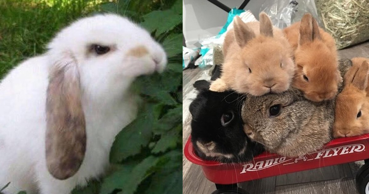 2 91.jpg?resize=1200,630 - 19 Bunny Memes and Photos That Will Warm Your Heart