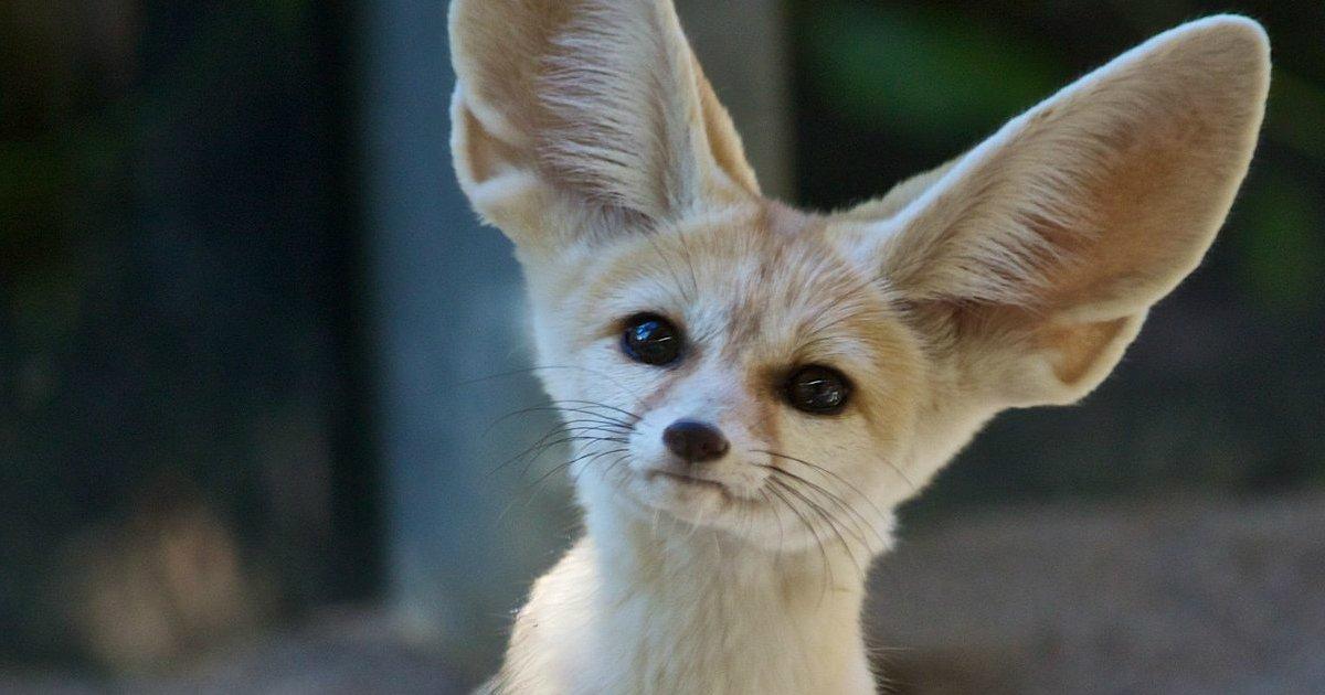 20 32.jpg?resize=1200,630 - 20 Der Kleinsten Tiere Der Welt, Die Micht So Süß Sein Dürfen