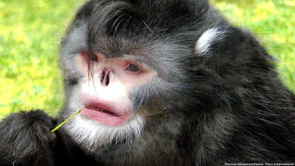 Mono estornudos