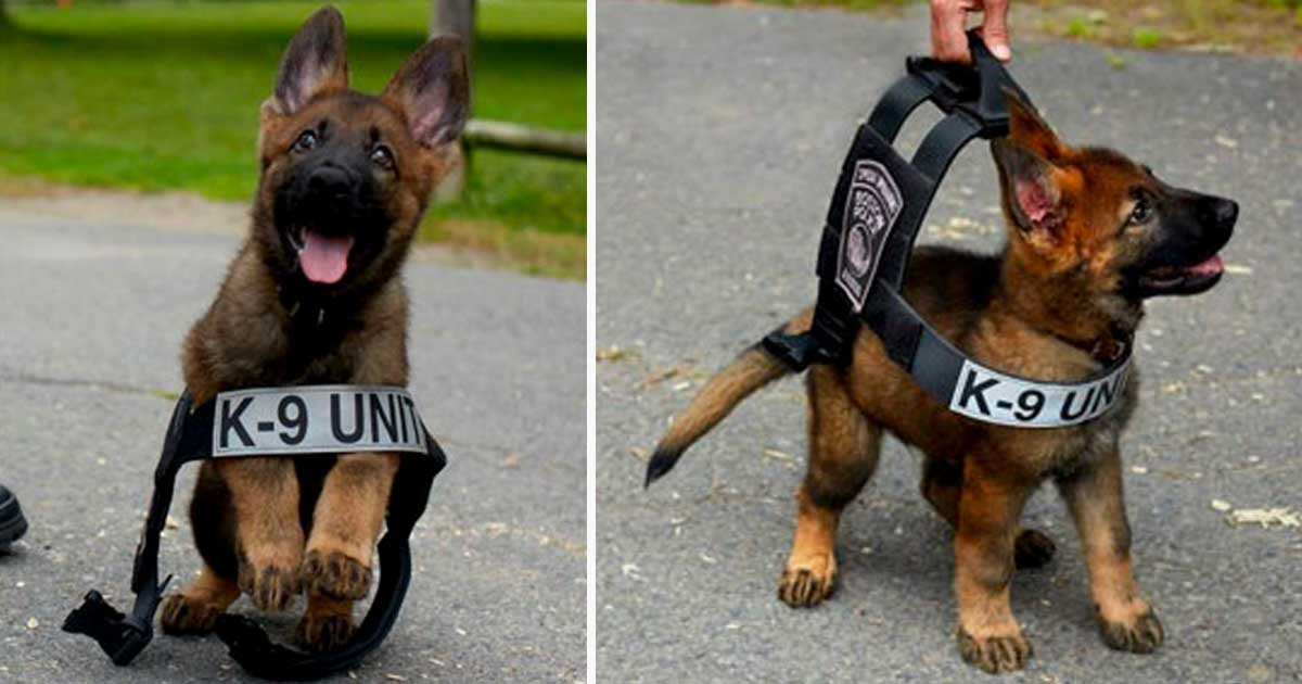 21 28.jpg?resize=636,358 - 30 Photos Of Puppies Taken On Their First Day Of Work