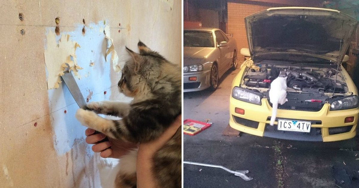 21 8.jpg?resize=636,358 - 23 Cats With Very Important Jobs