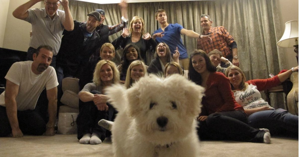 24 22.jpg?resize=636,358 - 15 Dogs Who Have An Uncanny Ability To Photobomb A Photo At The Perfect Moment