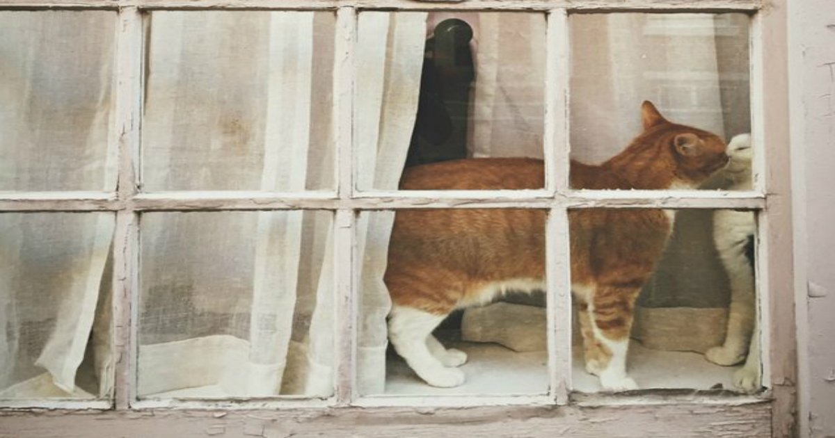 24 5.jpg?resize=1200,630 - 26 Cats Just Hanging Out In Windows