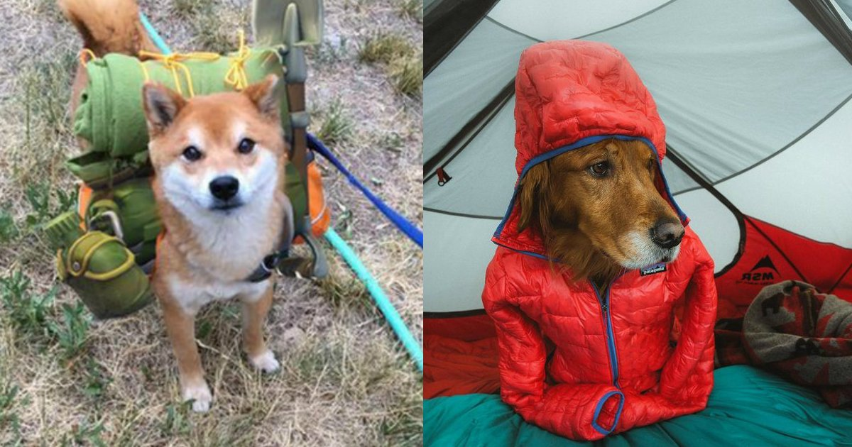 3 106.jpg?resize=1200,630 - Just 23 Photos Of Happy Dogs Who Are So Excited To Go Camping With You