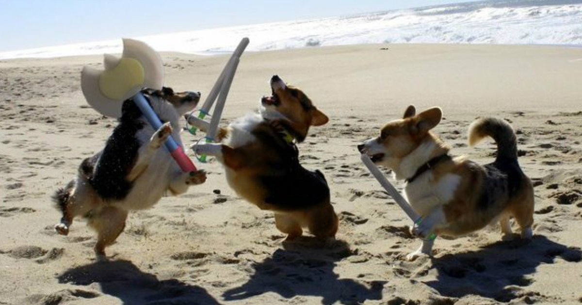 3 138.jpg?resize=1200,630 - 18 Endlessly Hilarious Animal Photos Guaranteed To Make Your Heart Cheer