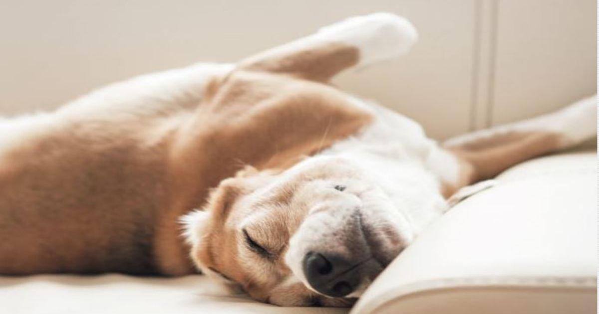 3 192.jpg?resize=1200,630 - 18 Best Dog Breeds for Kids