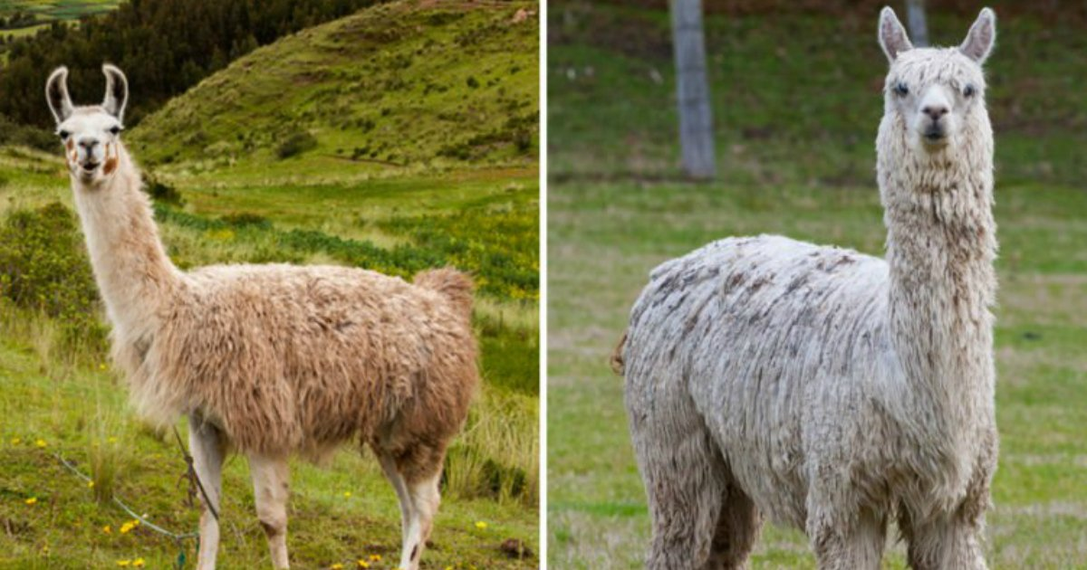 4 171.jpg?resize=1200,630 - Can You Tell the Difference Between These Nearly Identical Animals?