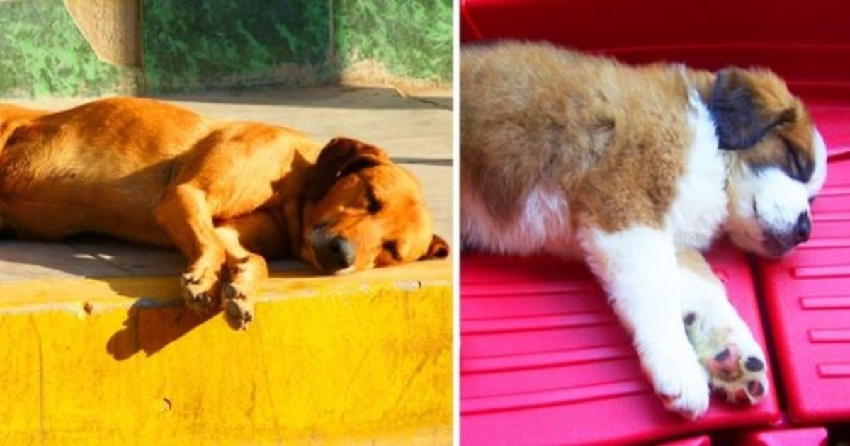 4 53.jpg?resize=1200,630 - What a Sleeping Position Can Say About Your Dog
