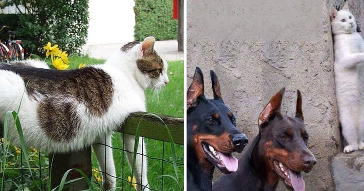 4 69.jpg?resize=1200,630 - 31 Fotos que demuestran que los gatos son criaturas divertidísimas