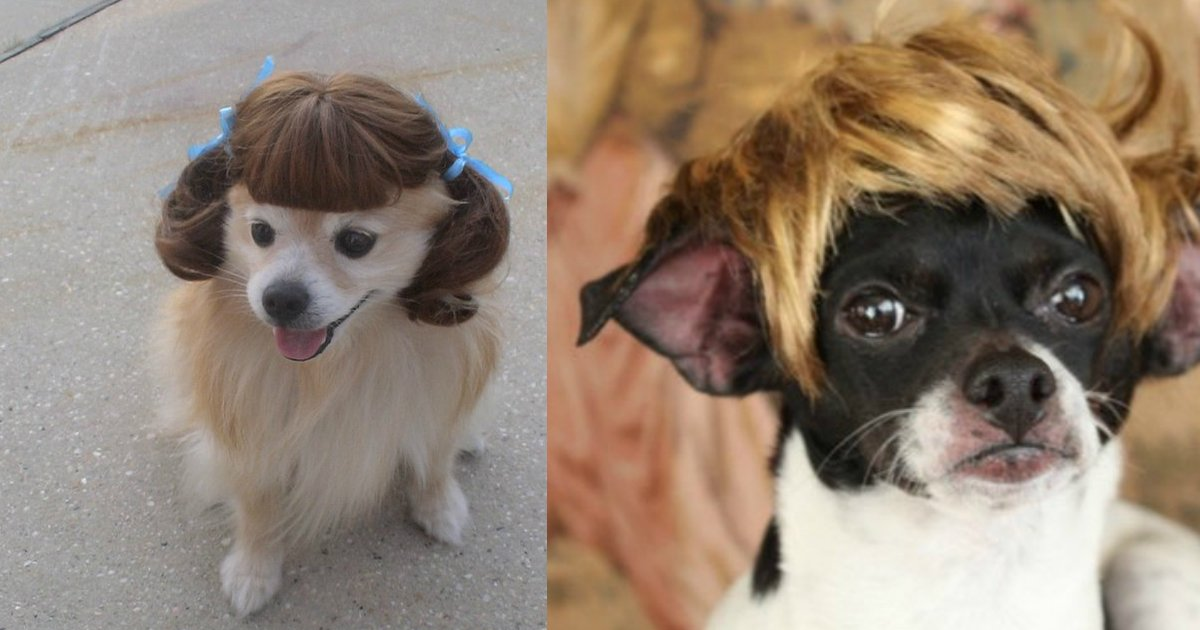 4 85.jpg?resize=1200,630 - 18 Dogs in Wigs Guaranteed to Make Your Mouth Laugh