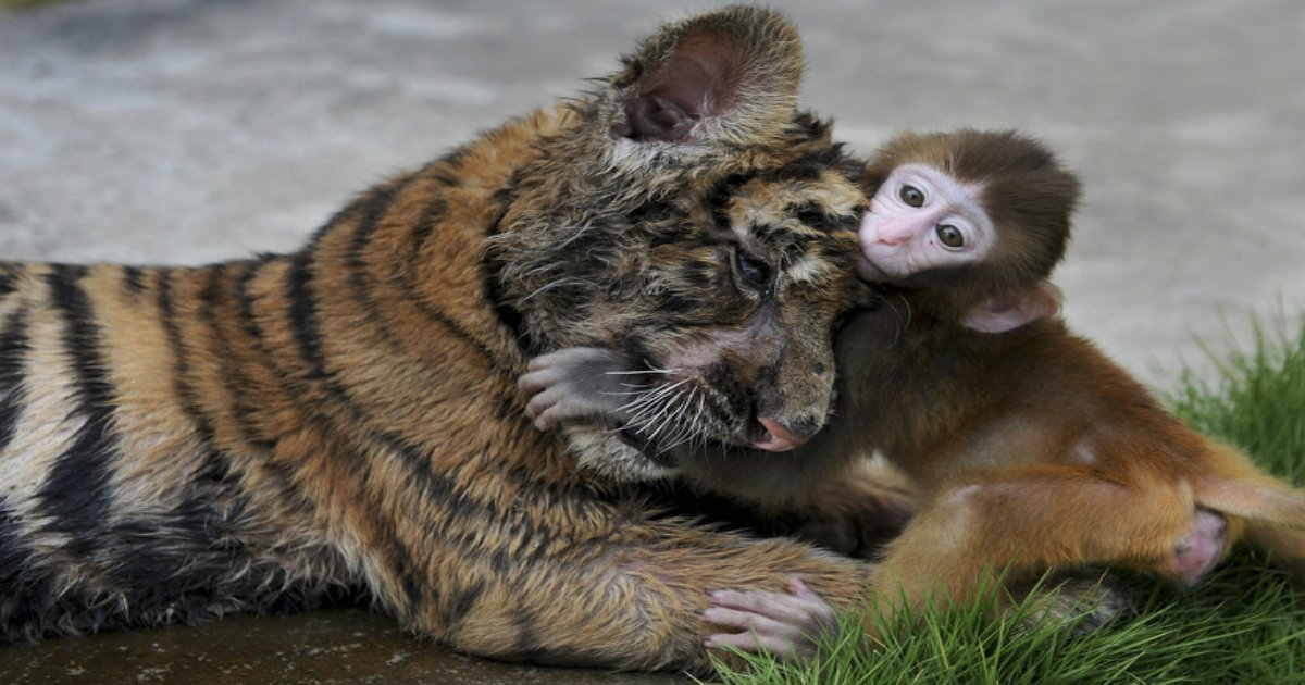 4 96.jpg?resize=1200,630 - 27 Photos of Animals That Turn Our Hearts to Mush
