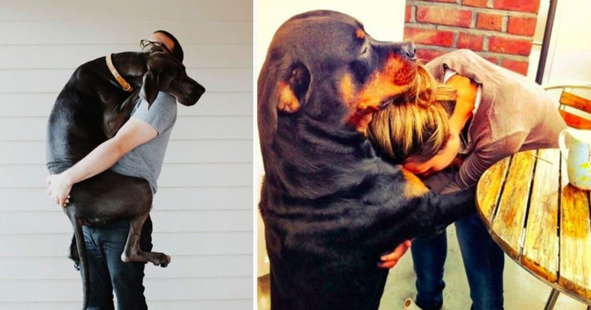 5 106.jpg?resize=1200,630 - 10+ Hilarious Dogs That Can't Stop Hugging Their Humans