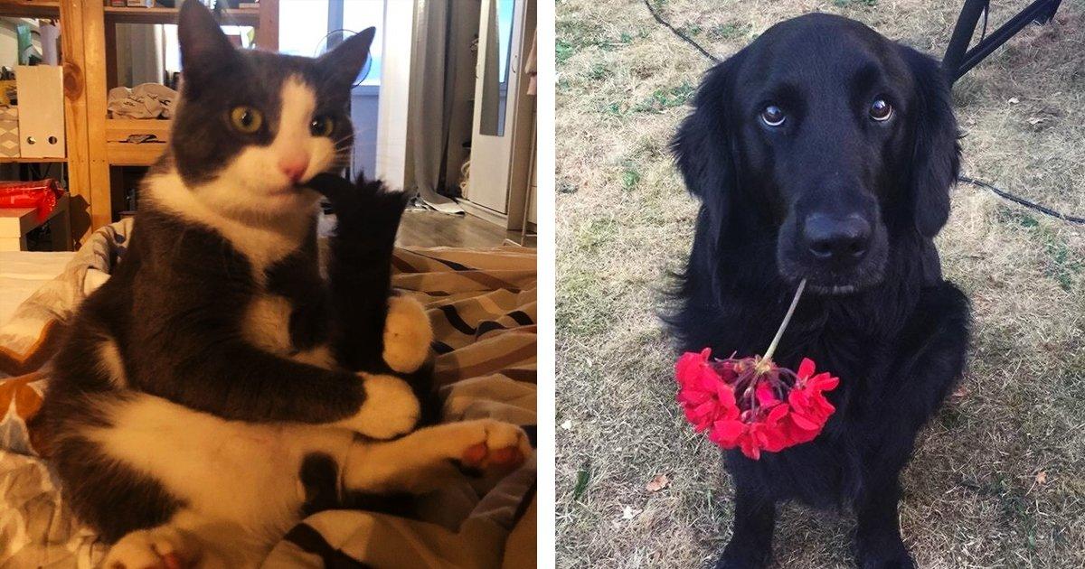 5 124.jpg?resize=1200,630 - 23 Fotos que retratan los extraños hábitos de perros y gatos que para ellos son de lo más normal
